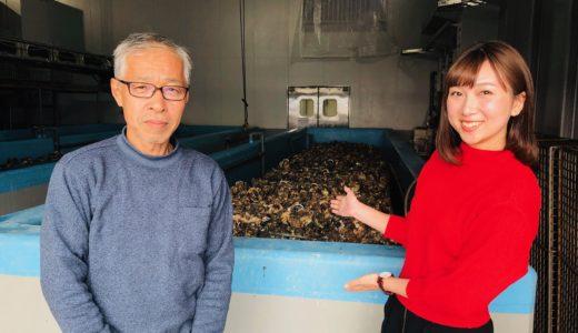 ハイブリッドアイスで牡蠣の時間をとめる|株式会社ケンスイ