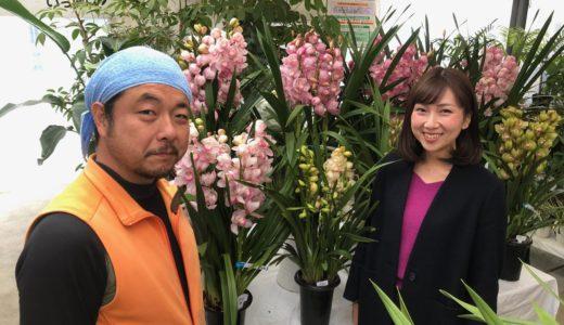 花と緑を生活のあらゆる場に|花と緑と&ランの殿堂 ハシモト園芸